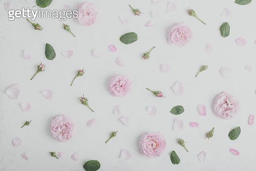 Wild flower rose floral background - gettyimageskorea
