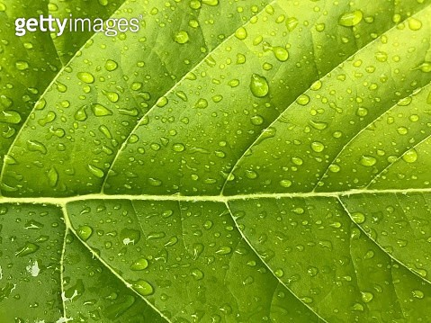 Full Frame Shot Of Wet Leaves - gettyimageskorea