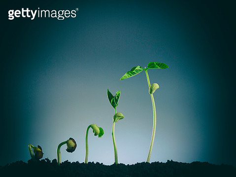 Close-Up Of Flowering Plant Against Sky - gettyimageskorea