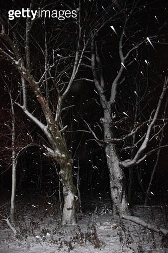 SNOW - gettyimageskorea