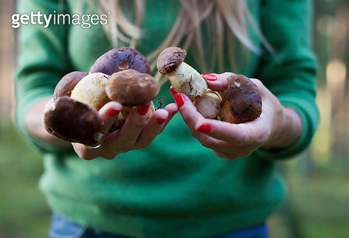 Woman holding freshly harvested porcini mushrooms, close-up of hands - gettyimageskorea