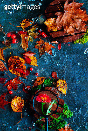 Count the petals - gettyimageskorea