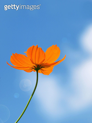 Low Angle View Of Orange Flower Against Sky - gettyimageskorea