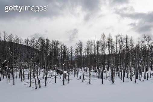 The Landscape of Shirogane Blue Pond in Winter season, Hokkaido, Japan - gettyimageskorea