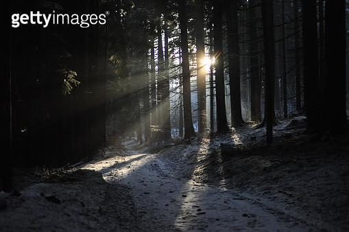 sunbeams in a forest - gettyimageskorea
