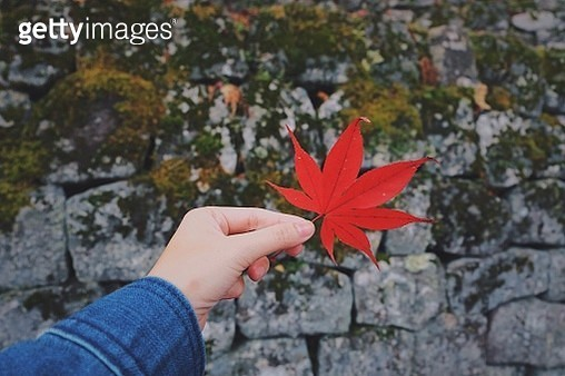 Close-Up Of Hand Holding Maple Leaf During Autumn - gettyimageskorea