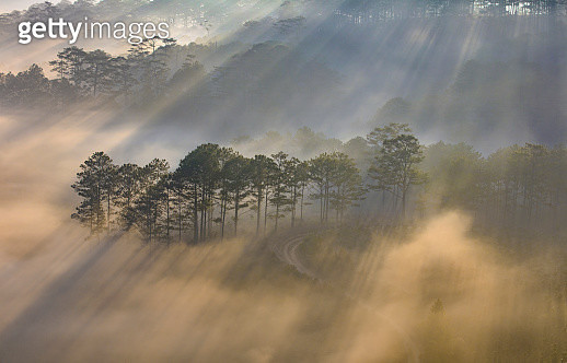 Pine forest sun ray - gettyimageskorea