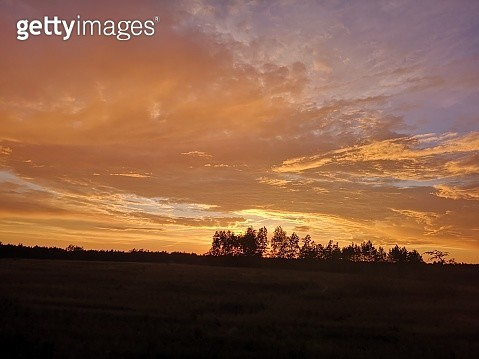 Silhouette Trees On Field Against Orange Sky - gettyimageskorea