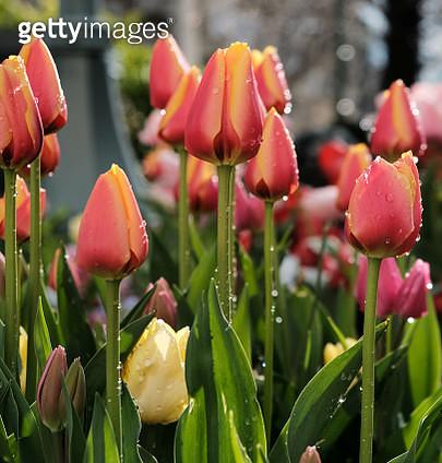 Close-Up Of Flowering Plants - gettyimageskorea
