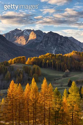 Dolomites foliage - gettyimageskorea