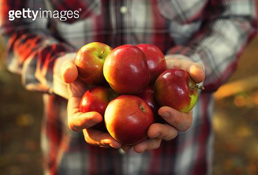 Autumn harvest - gettyimageskorea