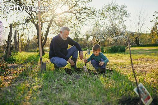 Grandfather looking at grandson planting tree while crouching at garden - gettyimageskorea