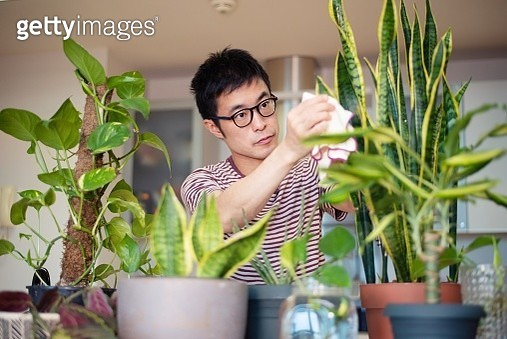 Man caring for his indoor plants - gettyimageskorea