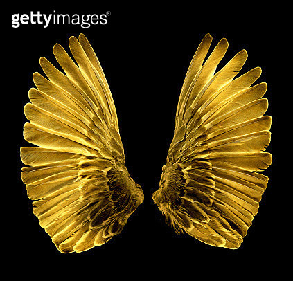 Gold, gilded sparrow wings on black. - gettyimageskorea