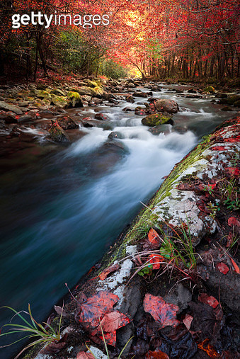 Fall Colors in the Smokies - gettyimageskorea