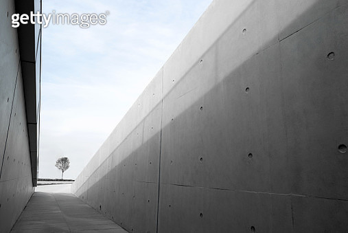 There is a tree at the end of the narrow corridor of the concrete building - gettyimageskorea