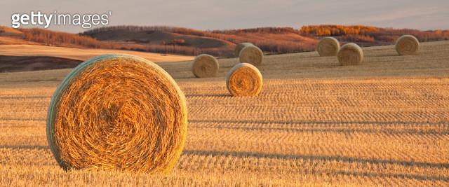 Hay Bales on the Prairie - gettyimageskorea