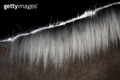 Mane hair of the horse - gettyimageskorea
