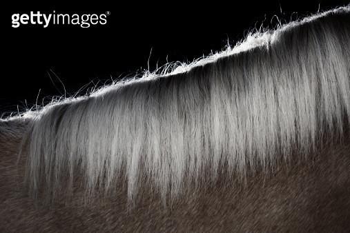 Mane hair of the horse - gettyimageskorea