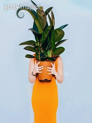 Woman Holding Potted Plant While Standing Over Blue Background - gettyimageskorea