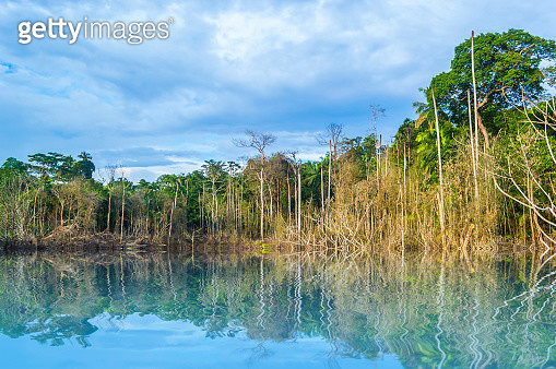 Reflection of dead tree with cloudy scene at tropical forest - gettyimageskorea