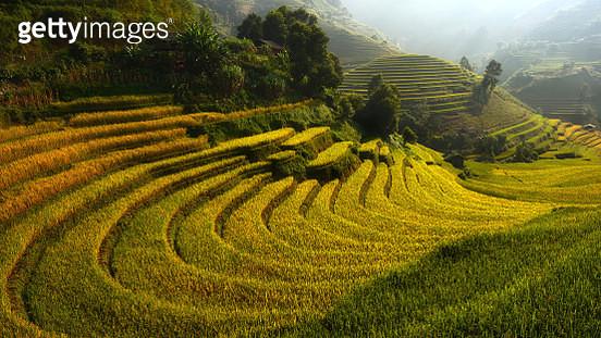 Rice terrace (Mu cang chai) - gettyimageskorea