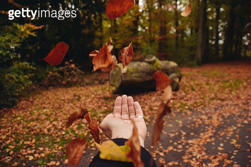 Cropped Hand Of Woman Throwing Maple Leaves Against Trees In Park - gettyimageskorea