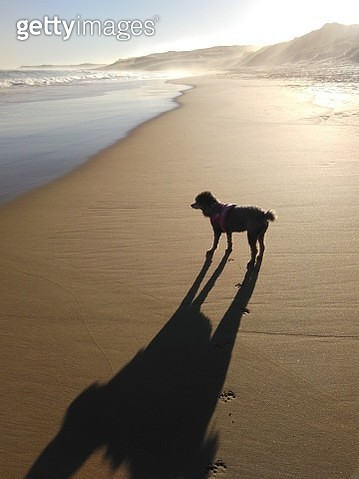 High Angle View Of Silhouette Dog Standing At Beach Against Sky During Sunset - gettyimageskorea