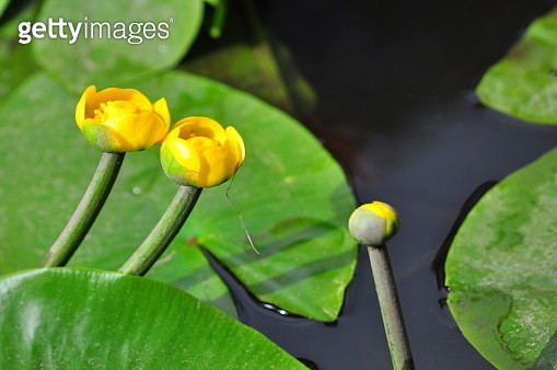 Close-Up Of Yellow Flowering Plant - gettyimageskorea
