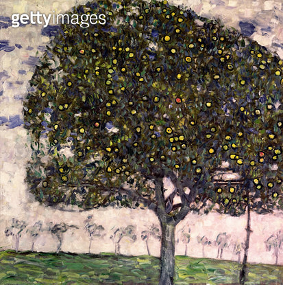 <b>Title</b> : The Apple Tree II, 1916 (oil on canvas)<br><b>Medium</b> : oil on canvas<br><b>Location</b> : Private Collection<br> - gettyimageskorea