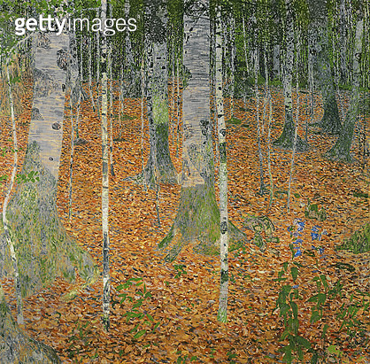 <b>Title</b> : The Birch Wood, 1903 (oil on canvas)<br><b>Medium</b> : oil on canvas<br><b>Location</b> : Private Collection<br> - gettyimageskorea