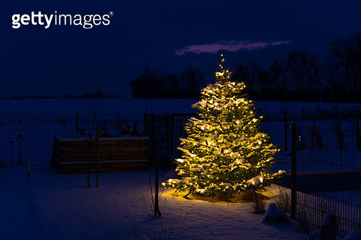 Christmas in GLR - christmas tree with snow and lights in garden - gettyimageskorea