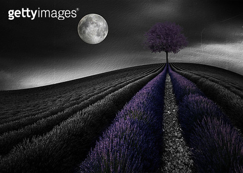 Black and white scenery/ Landscape Backgrounds - gettyimageskorea
