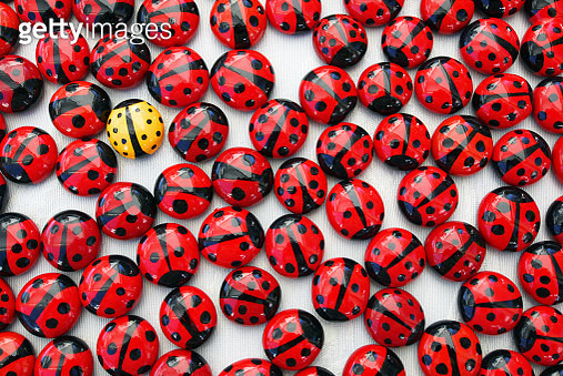 Painted ladybirds on a white cloth for sale. Overhead view, close-up, full frame. Just one of them shows a different, unusual color. - gettyimageskorea