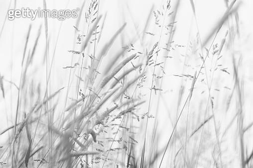 Grass - gettyimageskorea