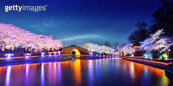 Cherry Blossoms Lush Open Season - gettyimageskorea