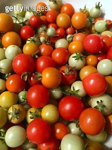 Tomato harvest - gettyimageskorea