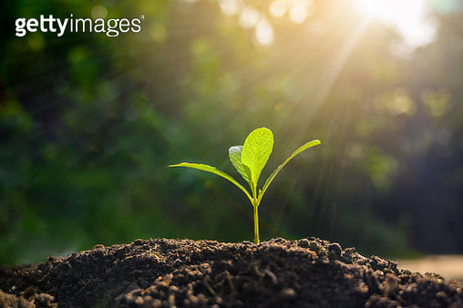 Development of seedling growth Planting seedlings young plant in the morning light on nature background - gettyimageskorea