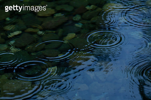 Raindrops fall on the lotus pond - gettyimageskorea