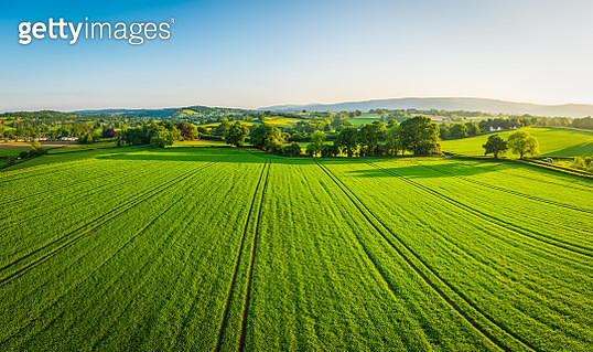 Aerial panorama over healthy green crops in patchwork pasture farmland - gettyimageskorea