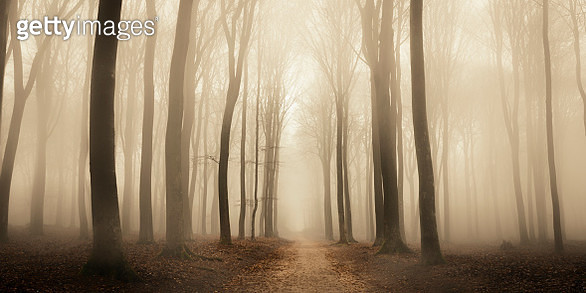 Path through a misty forest during a foggy winter day - gettyimageskorea