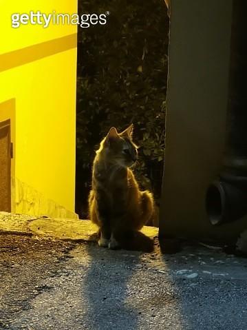 Cat Looking At Camera - gettyimageskorea