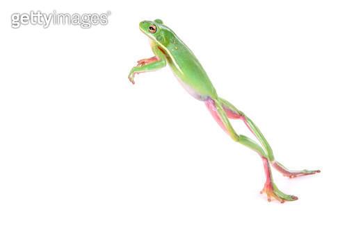 Frog Jumping - gettyimageskorea