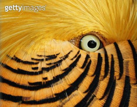 Feathery flirt - gettyimageskorea