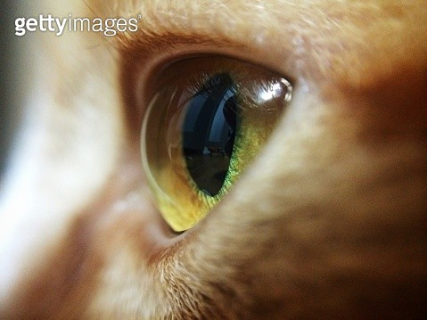 Close-Up Of Cats Eye - gettyimageskorea