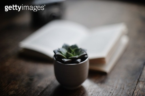Green succulent plant in pot with book - gettyimageskorea