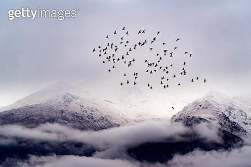 birds fly - gettyimageskorea