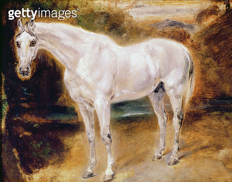 White Horse (oil on canvas) - gettyimageskorea