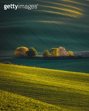 Beautiful lanscape view with green hills and spring trees in South Moravia, Czechia during sunset. - gettyimageskorea