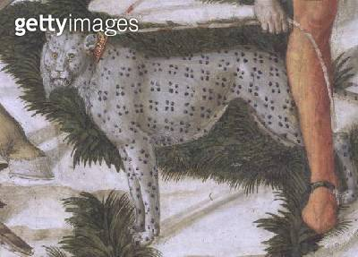 <b>Title</b> : Leopard straining on a leash, detail from the Journey of the Magi cycle in the chapel, c.1460 (fresco) (detail of 70601)<br><b>Medium</b> : fresco<br><b>Location</b> : Palazzo Medici-Riccardi, Florence, Italy<br> - gettyimageskorea